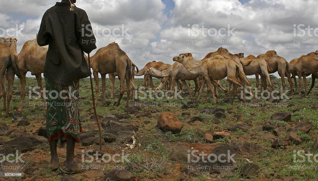 camel herder, marsabit, kenya stock photo
