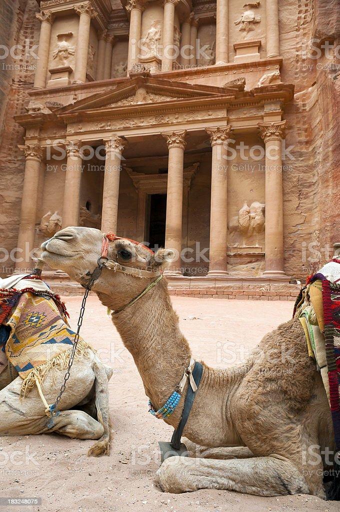 Camel in Petra, Jordan royalty-free stock photo