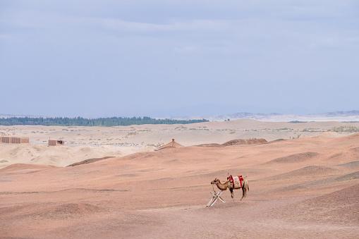 A camel standing in the barren gobi desert, at the historical site of Yang Pass, in Yangguan, Gansu, China