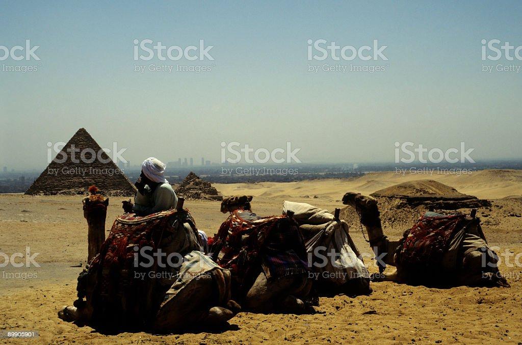 Camel Man royalty-free stock photo