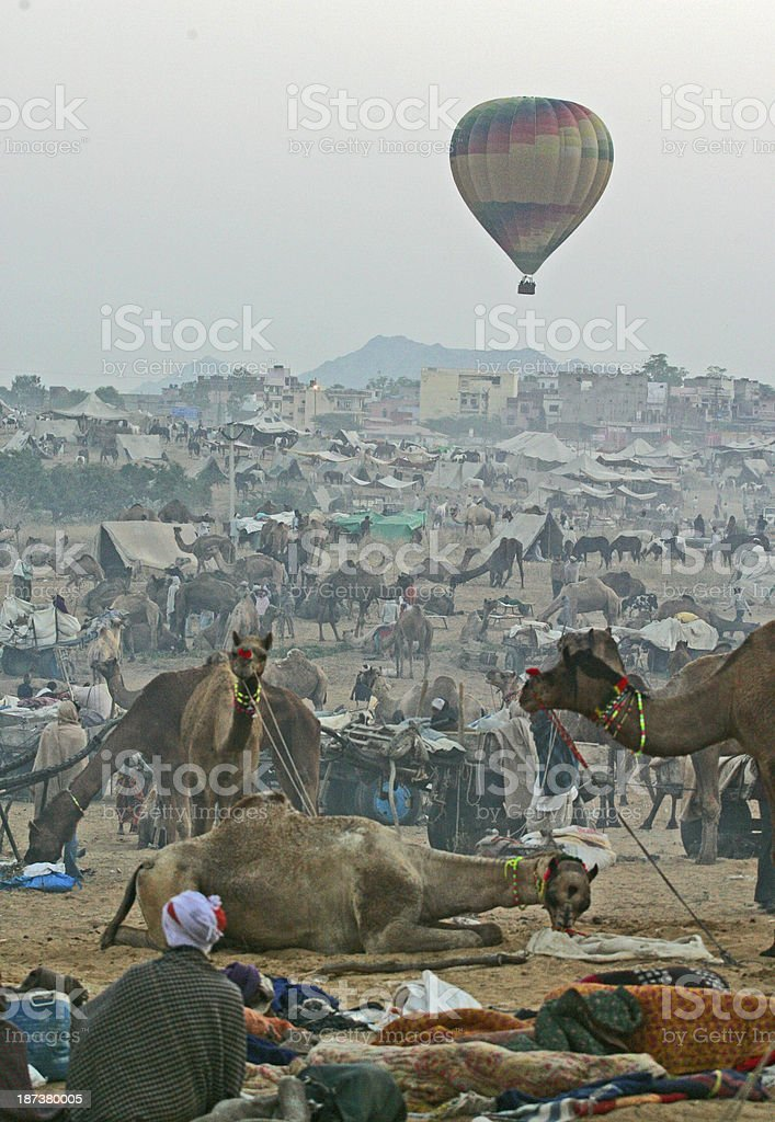 Camel market royalty-free stock photo