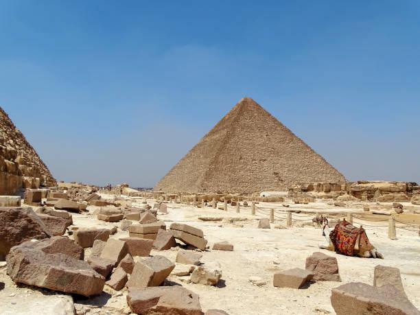 A camel next to the pyramids stock photo