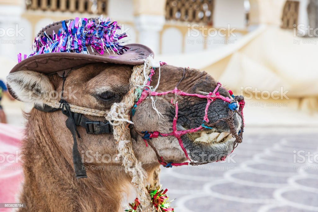 Camel on the square of Habib Bourguiba with shady Arabic pavilion and Medieval fortress Ribat in Monastir stock photo