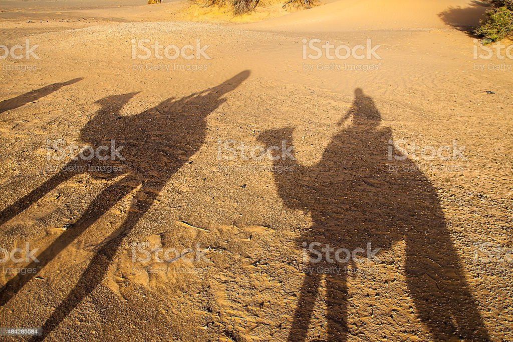 Camel stock photo