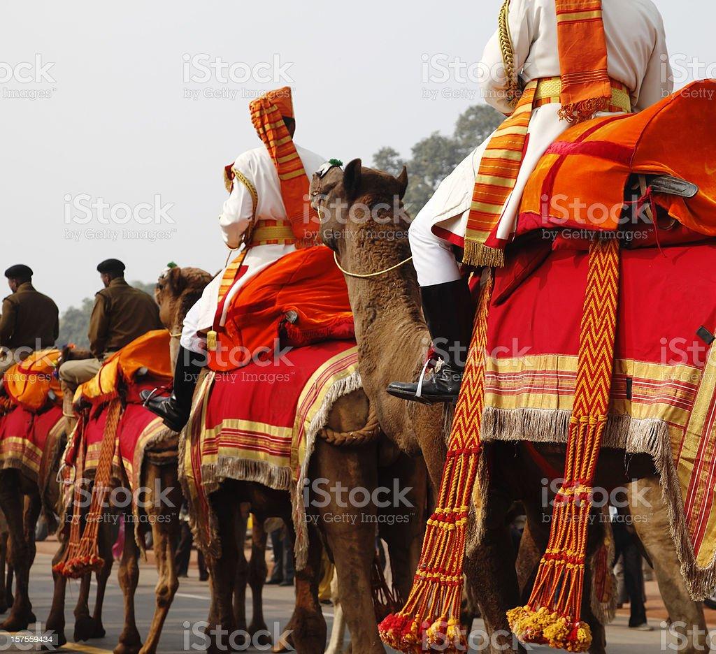 Camel regiment royalty-free stock photo