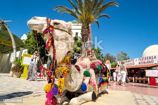 Camel resting in tourist area in Hammamet old town. Captured in Tunisia in May 2016