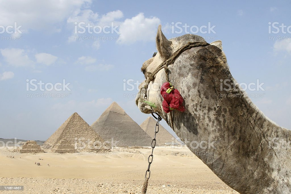 Camel Ride to the Pyramids royalty-free stock photo