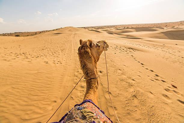 camel rider view in thar desert, rajasthan, india - camello fotografías e imágenes de stock
