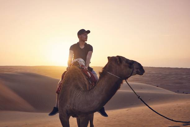 Camel riding in desert Camel riding in desert at amazing sunset. Young man enjoying journey on sand dunes. Wahiba Sands in Sultanate of Oman working animal stock pictures, royalty-free photos & images