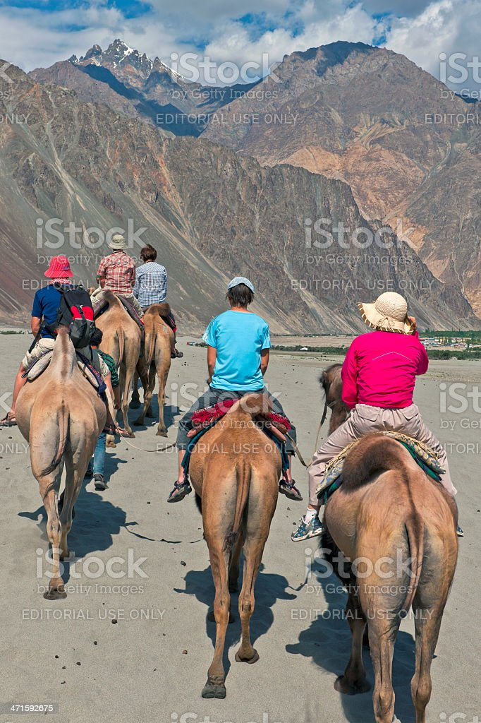 Camel Riding in Nubra Valley Desert India royalty-free stock photo