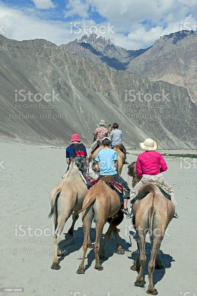 Camel Riding Nubra Valley India royalty-free stock photo