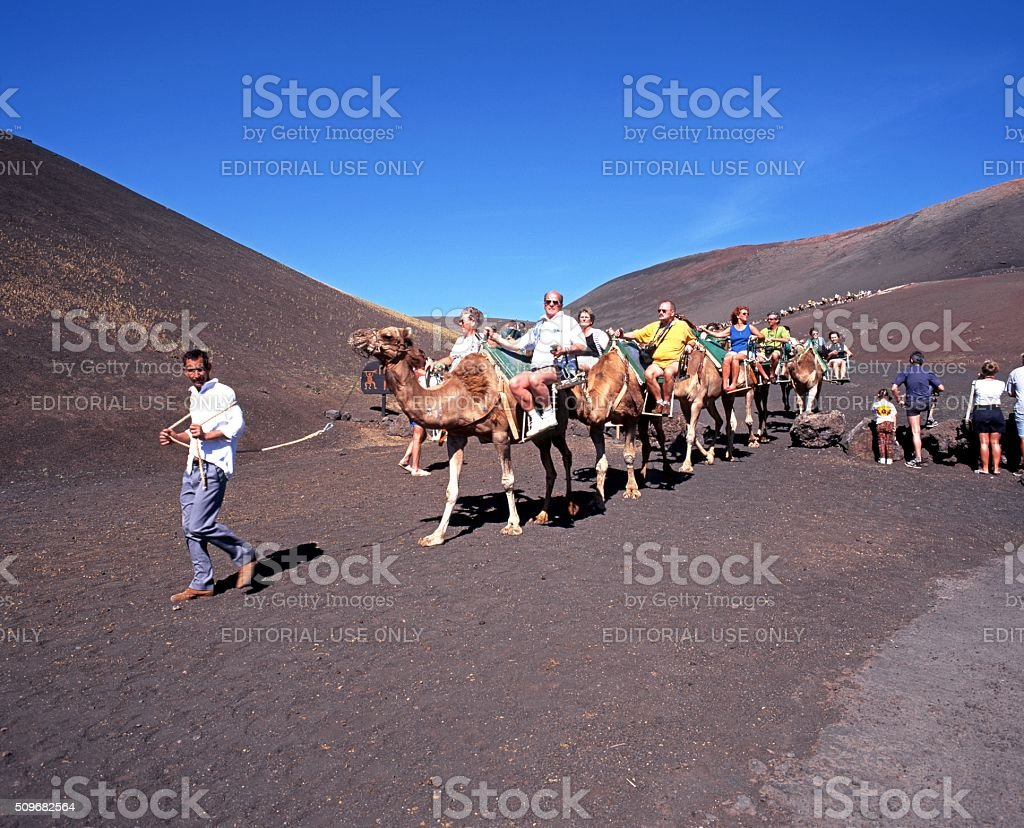 Camel Safari in Timanfaya National Park. stock photo