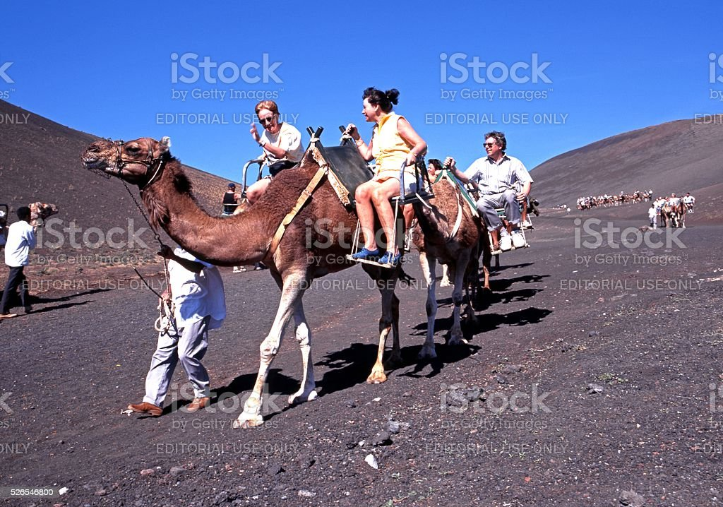 Camel Safari, Lanzarote. stock photo
