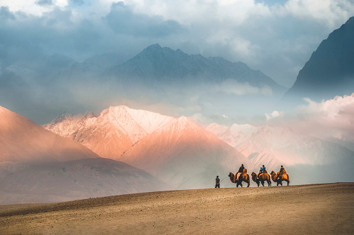Camel Safari Ride Caravan In Hunder Desert Nubra Valley Leh Ladakh India Stock Photo - Download Image Now