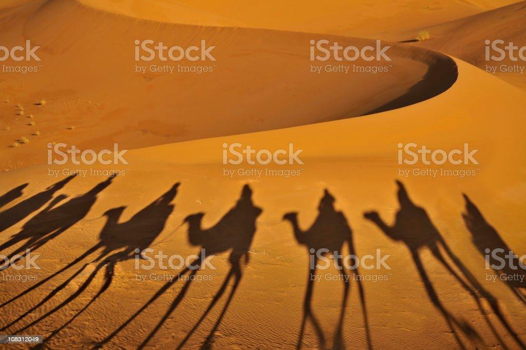 Camel Shadows royalty-free stock photo