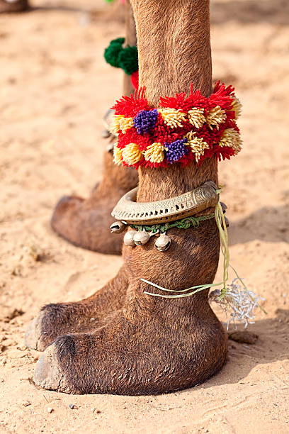 Royalty Free Camel Toe Pictures, Images and Stock Photos ...