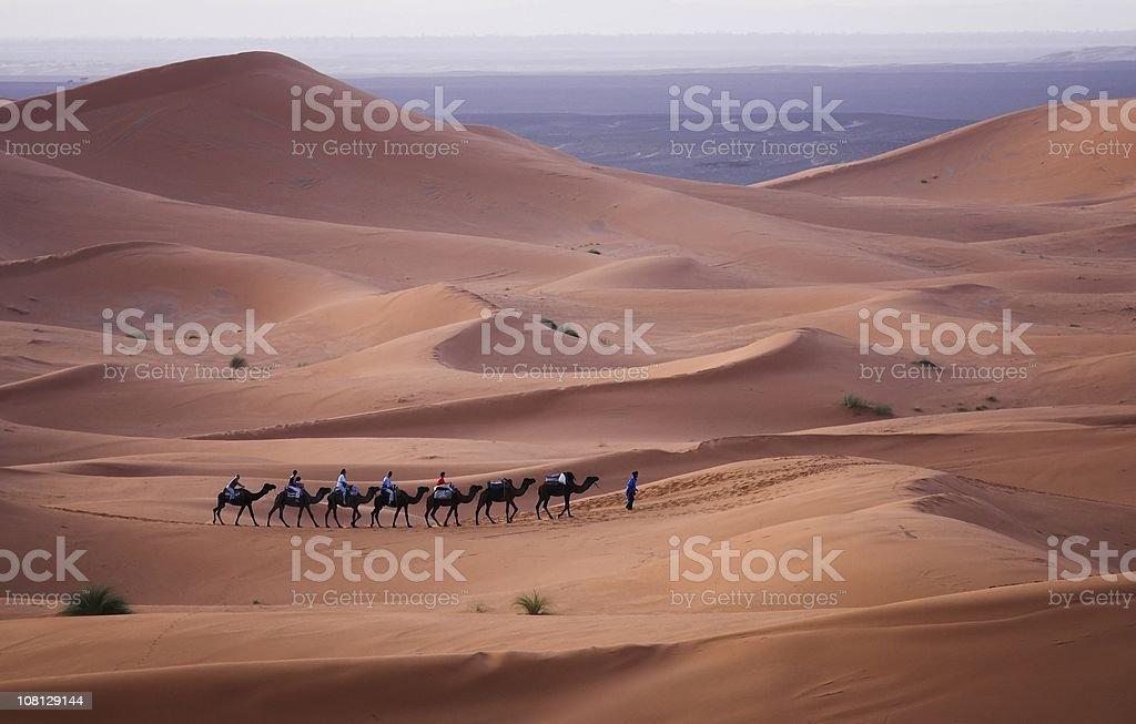 Camel train moving across the Sahara Desert stock photo