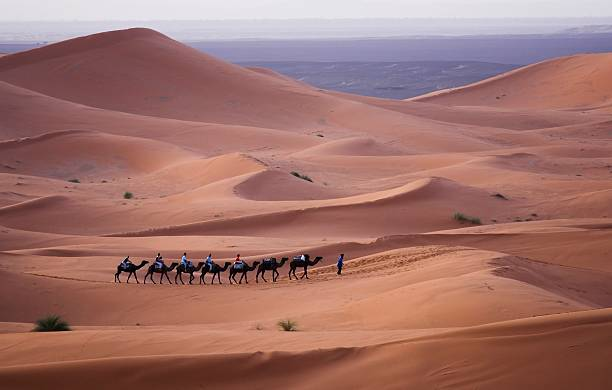 camel train moving across the sahara desert - algeria stock photos and pictures