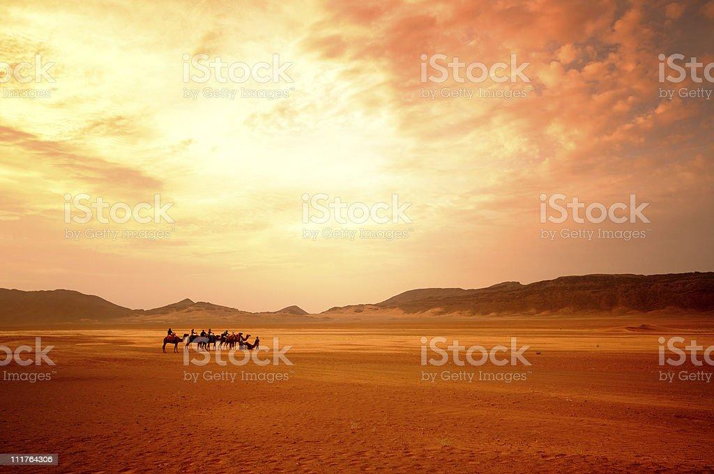 Camel Trekking - Sahara Desert stock photo