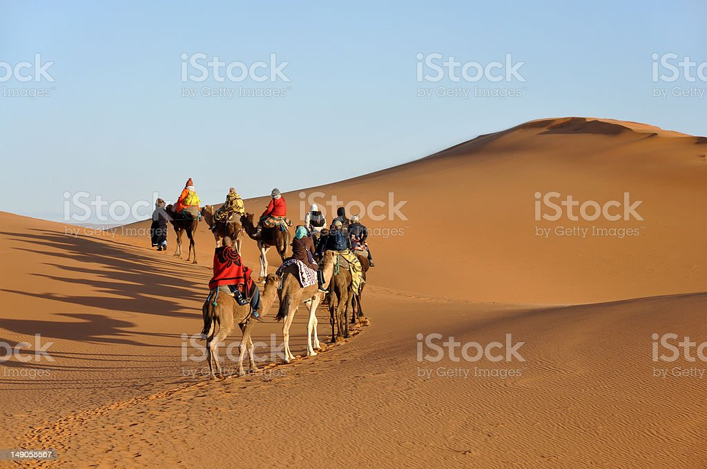 Camel trip in Sahara desert stock photo
