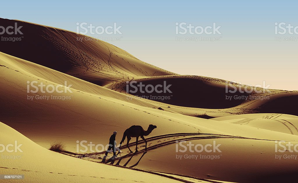 Camel with herdsman stock photo
