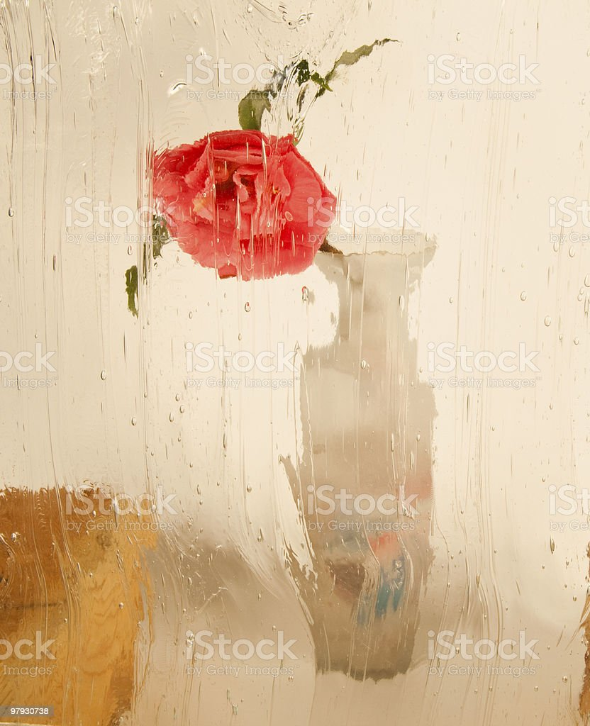 Camelia Under Glass royalty-free stock photo