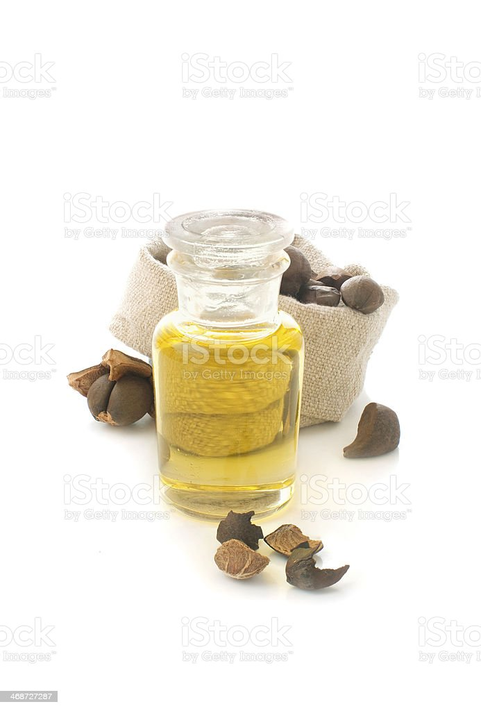 camellia nuts and oil stock photo