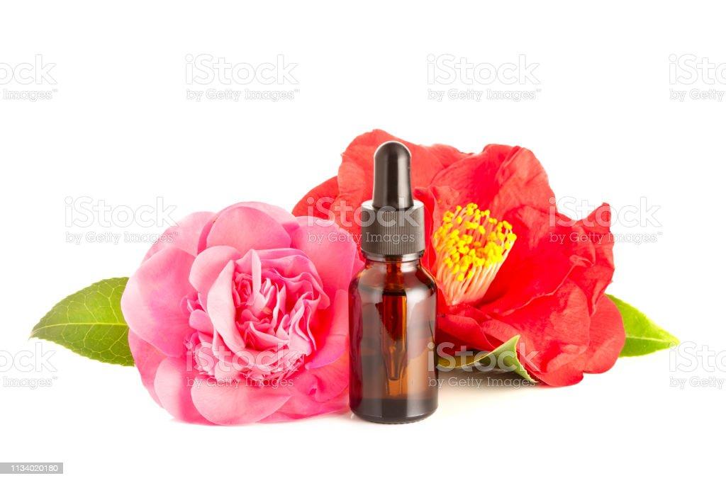 Camellia oil isolated on white background stock photo