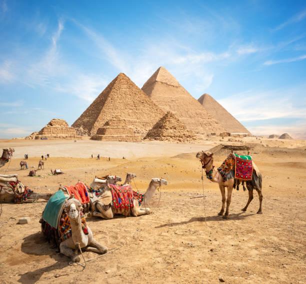 Kamele und Pyramiden – Foto