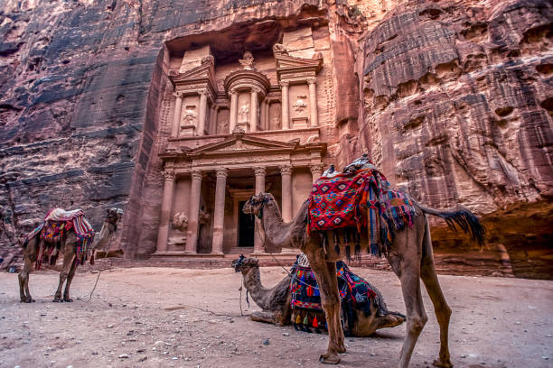Camels are laying and standing in front of the Al Khazneh tomb. The Treasury tomb of Petra, Jordan - Image, selective focus stock photo