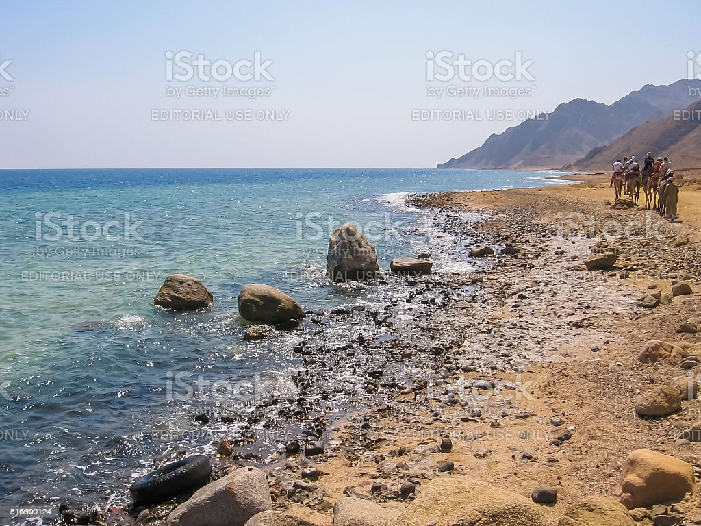 Camels Blue Hole Dahab stock photo