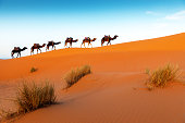 Camels in a series of walk-up,  Desert - Erg Chebbi ,Merzouga, Morocco,North Africa