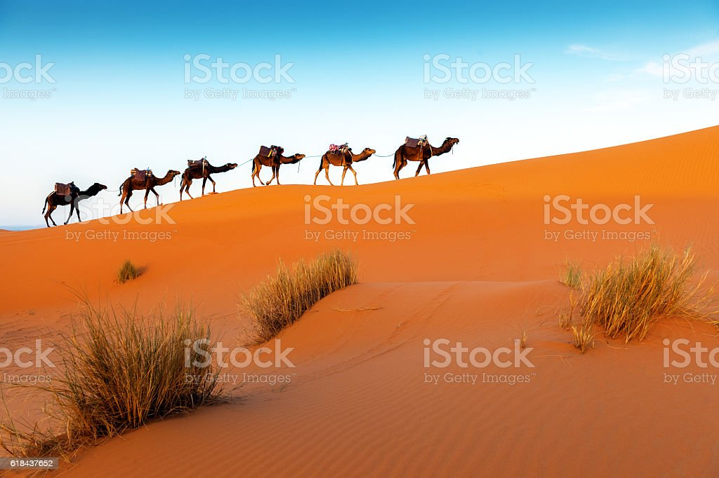 Camels in a series of walk-up, Erg Chebbi, Morocco - Photo