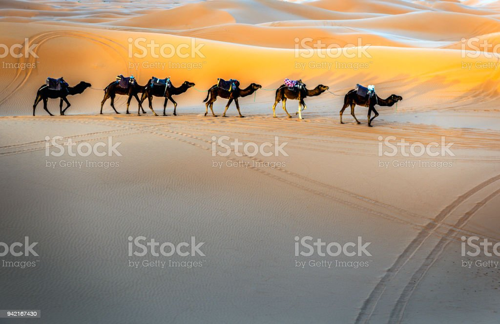 Camels in a series of walk-up, Erg Chebbi, Morocco,North Africa stock photo