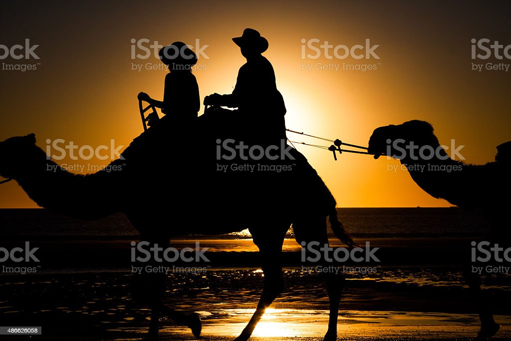 Camels in Cable Beach stock photo