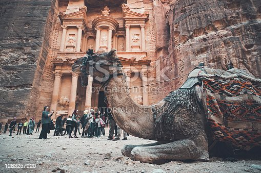 PETRA, JORDAN - 26 October 2018: Camels in front of the Treasury at Petra the ancient City Al Khazneh in Jordan. Tourists walk in the background.