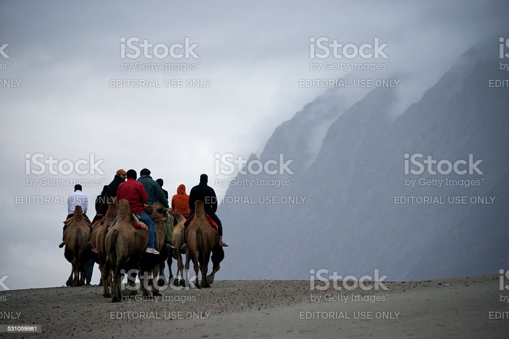 Camels in Sand Dunes stock photo