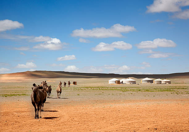 camels in the Gobi Desert A camel caravan across the desert leaving the Gers of farmers to the distance independent mongolia stock pictures, royalty-free photos & images
