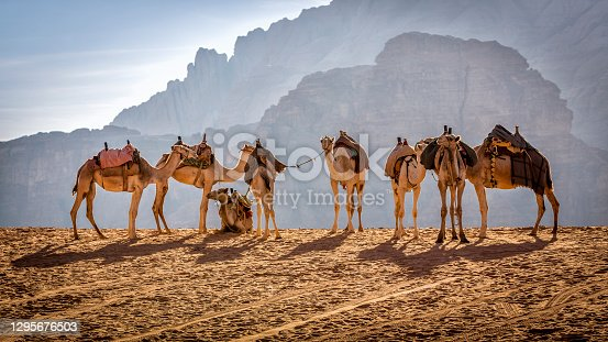Jordan - Middle East, Wadi Rum, Camel, Desert, Riding