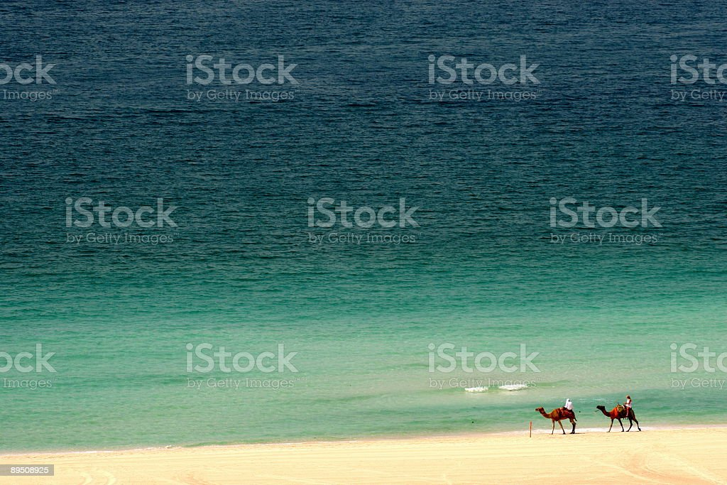 Camels on the beach royalty-free stock photo