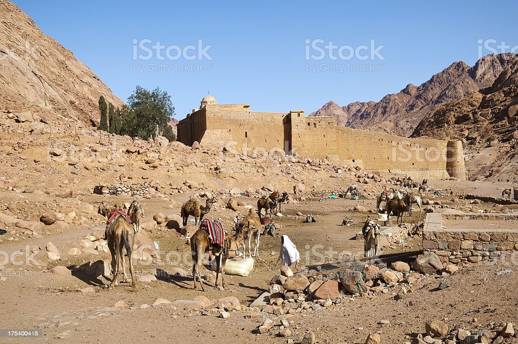 Camels and Saint Catherine's Monastery stock photo