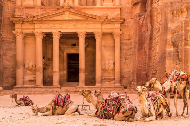 petra, jordanie - 30 juin 2014: chameaux au repos près de l'ancien temple de petra, jordanie - jordan photos et images de collection