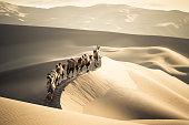camels walk on the sand dunes, desert landscape at dusk