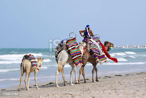 Camels on the beach of Djerba.My other similar images