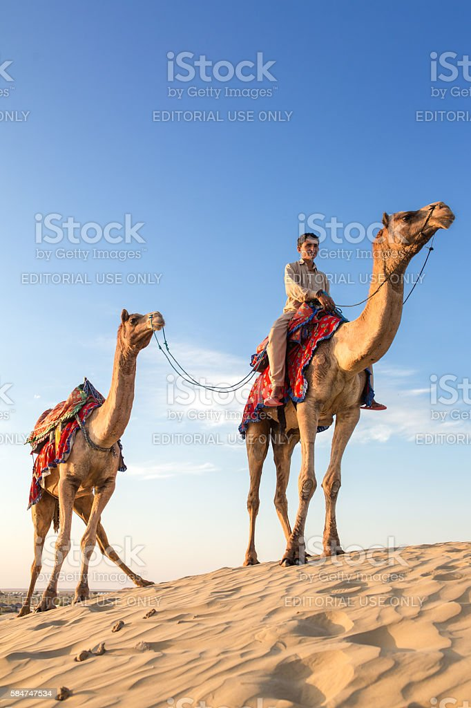 Camels with a rider in Thar desert, Rajasthan, India stock photo