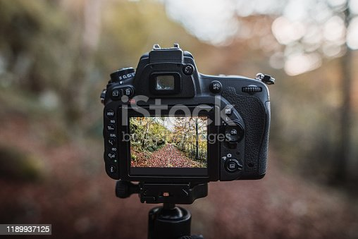 A DSLR camera on a tripod capturing a beautiful forest in autumn