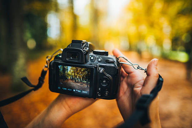 camera capturing a forest - camera photographic equipment stock photos and pictures