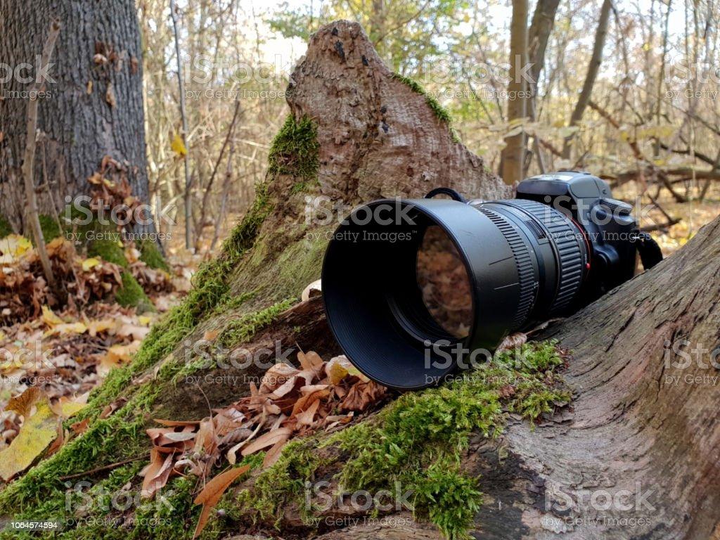 SLR camera in nature icon stock photo