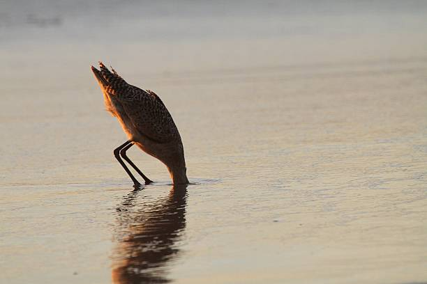 Camera Shy Bird with head in sand at a beach. head in the sand stock pictures, royalty-free photos & images