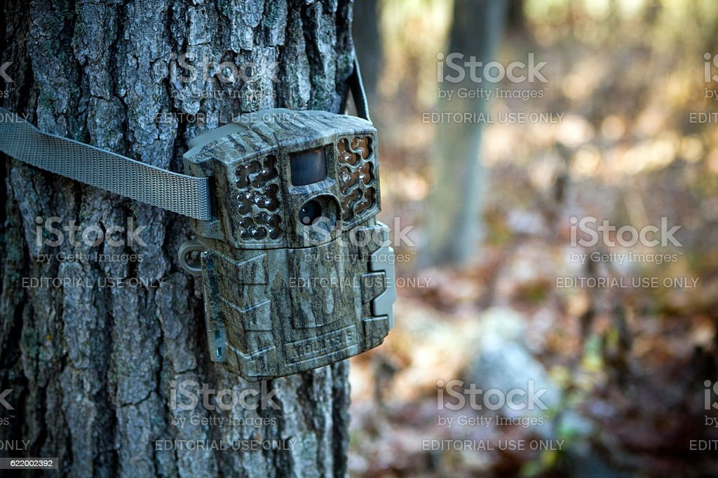 Camera to monitor deer in hunting woods stock photo